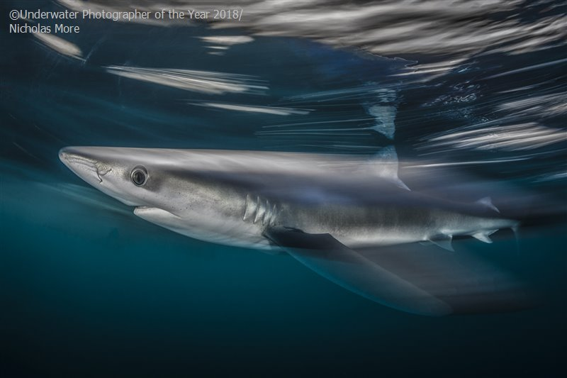 Shark Speed, © Nicholas More (UK), British Waters Wide Angle Runner Up, Underwater Photographer of the Year