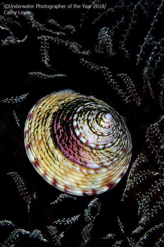 Topshell Tapestry, © Cathy Lewis (UK), British Waters Macro Runner Up, Underwater Photographer of the Year