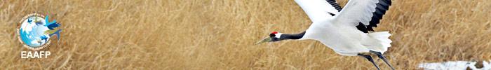 Waterbirds Photo Contest - EAAFP