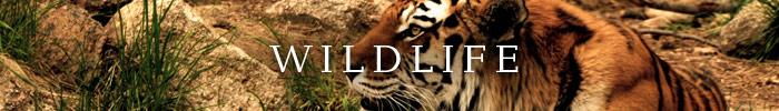 Wildlife Photo Contest