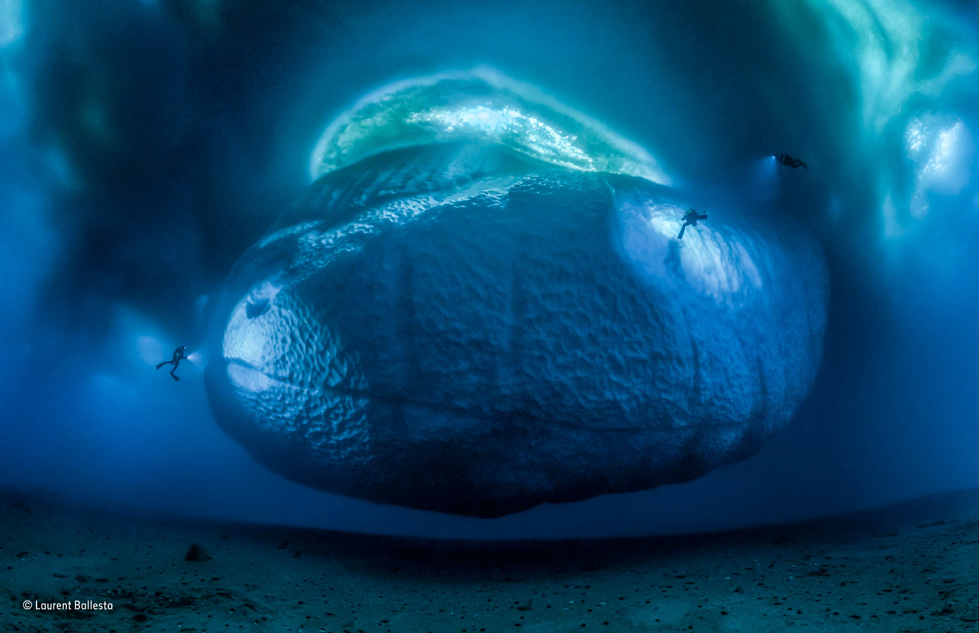 The ice monster, © Laurent Ballesta, France, Earth's Environments Winner, Wildlife Photographer of the Year
