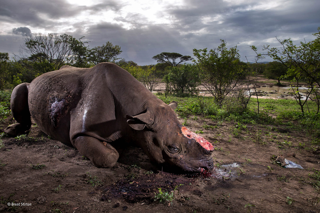 © Brent Stirton, South Africa, Wildlife Photographer of the Year 2017, Grand title winner, Wildlife Photographer of the Year