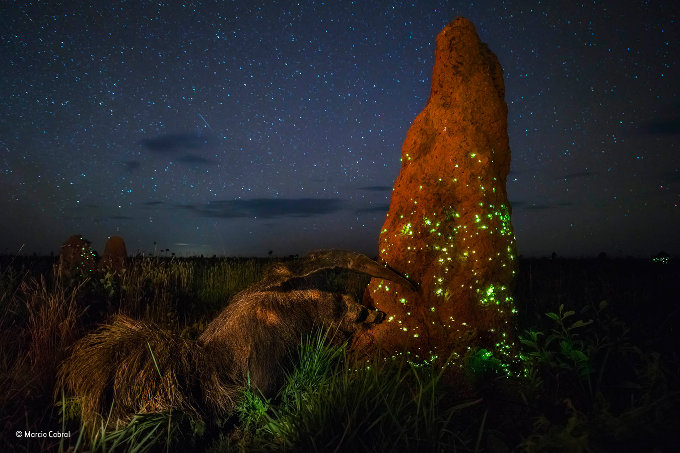 The night raider, © Marcio Cabral, Brazil, Animals in their Environment Winner, Wildlife Photographer of the Year