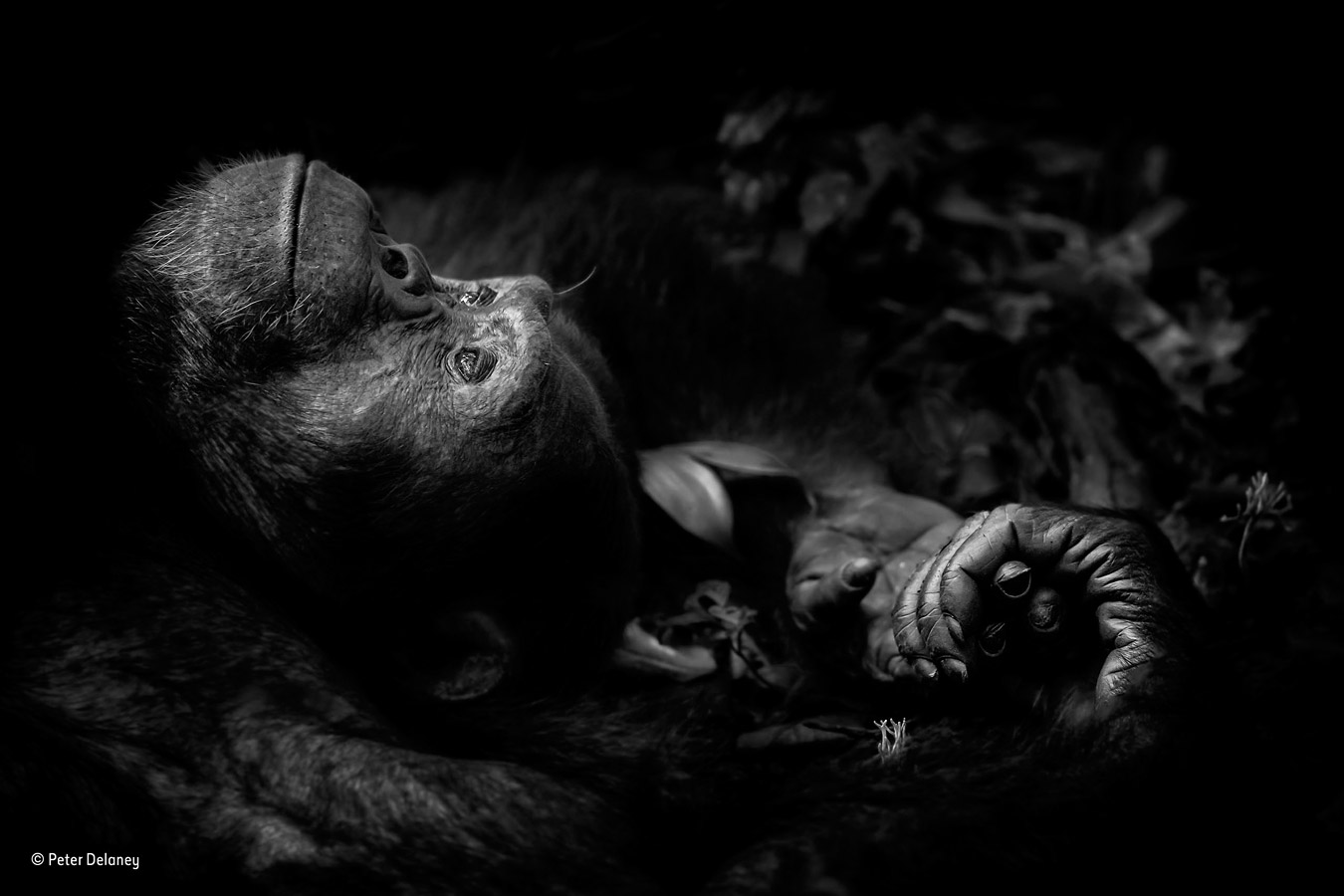 Contemplation, © Peter Delaney, Ireland/South Africa, Animal Portraits Winner, Wildlife Photographer of the Year