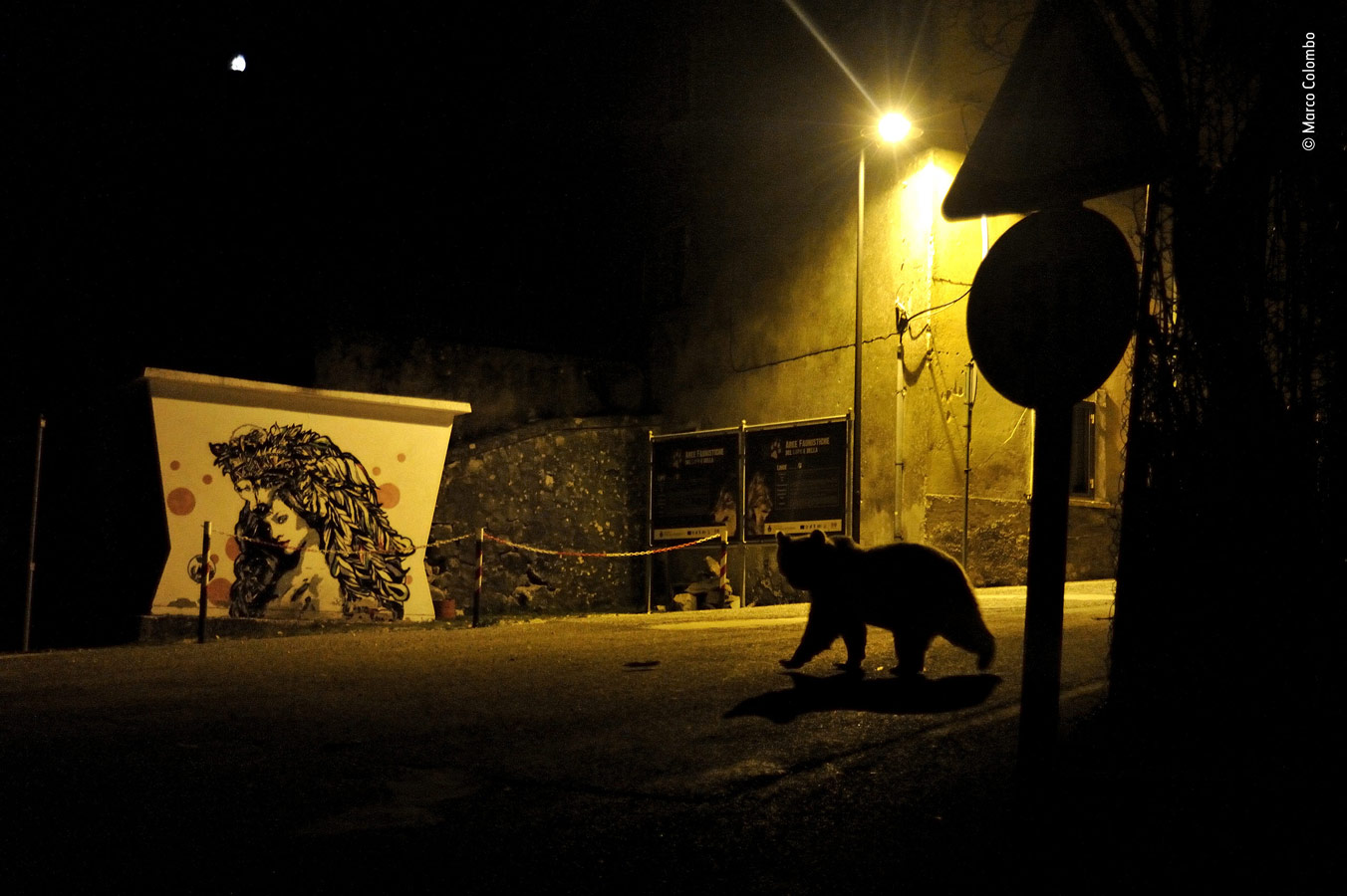 Urban Wildlife Category Winner, Crossing Paths, © Marco Colombo, Italy, Wildlife Photographer of the Year