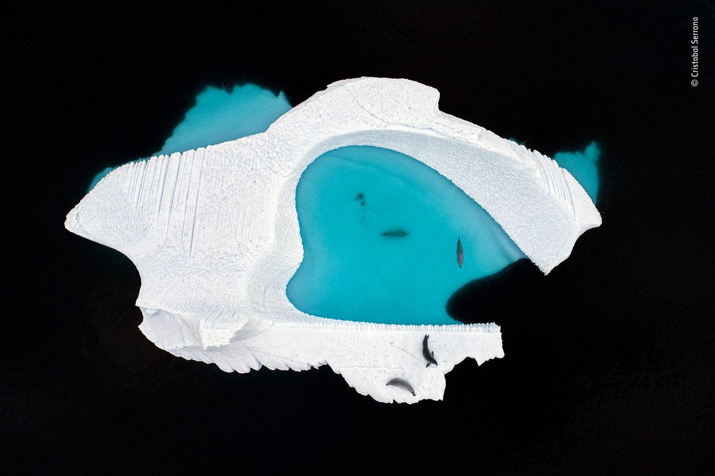 Creative Visions Category Winner, The Ice Pool, © Cristobal Serrano, Spain, Wildlife Photographer of the Year