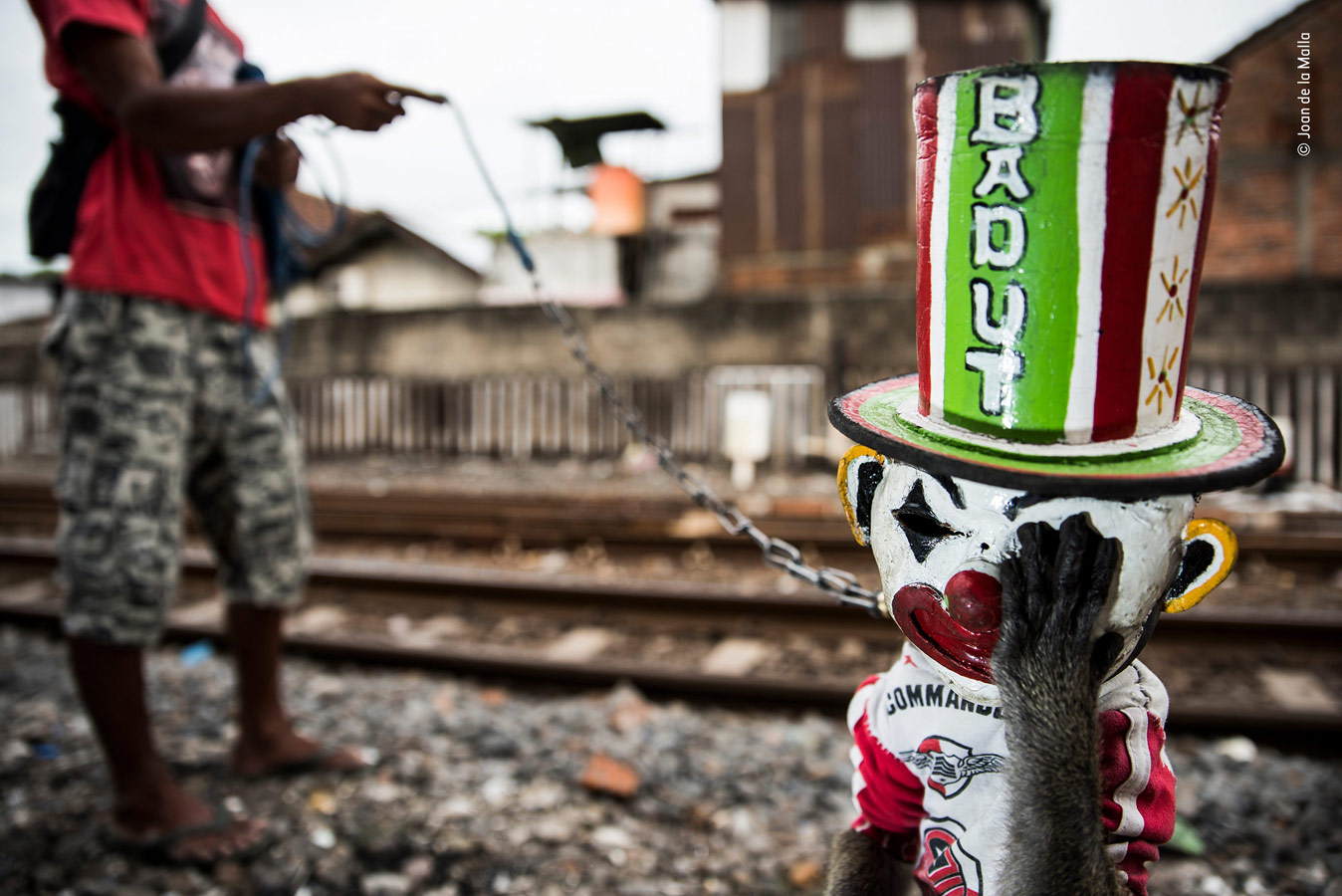 Wildlife Photojournalism Category Winner, The Sad Clown, © Joan de la Malla, Spain, Wildlife Photographer of the Year
