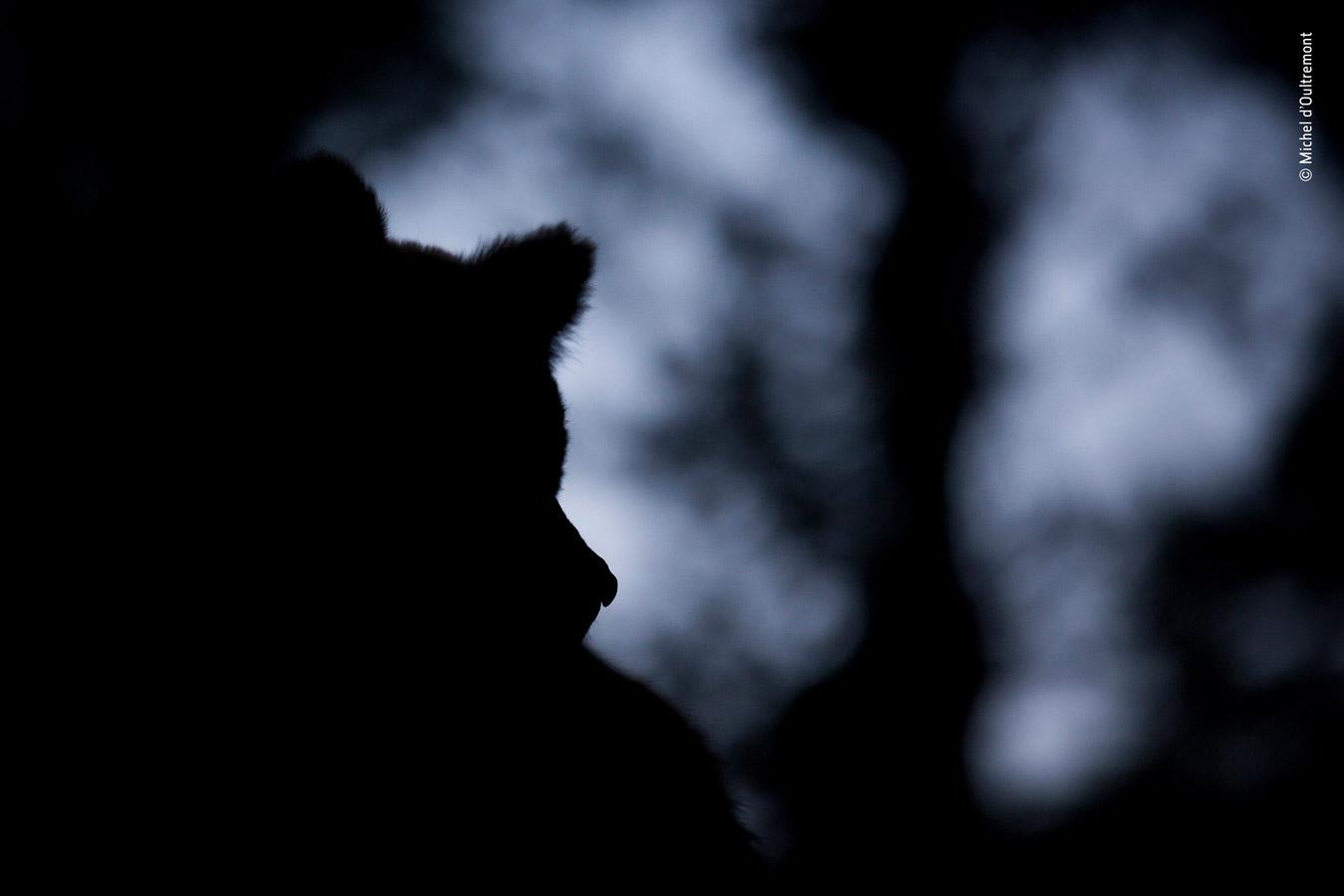 Rising Star Portfolio Award Winner, © Michel d'Oultremont, Belgium, Wildlife Photographer of the Year
