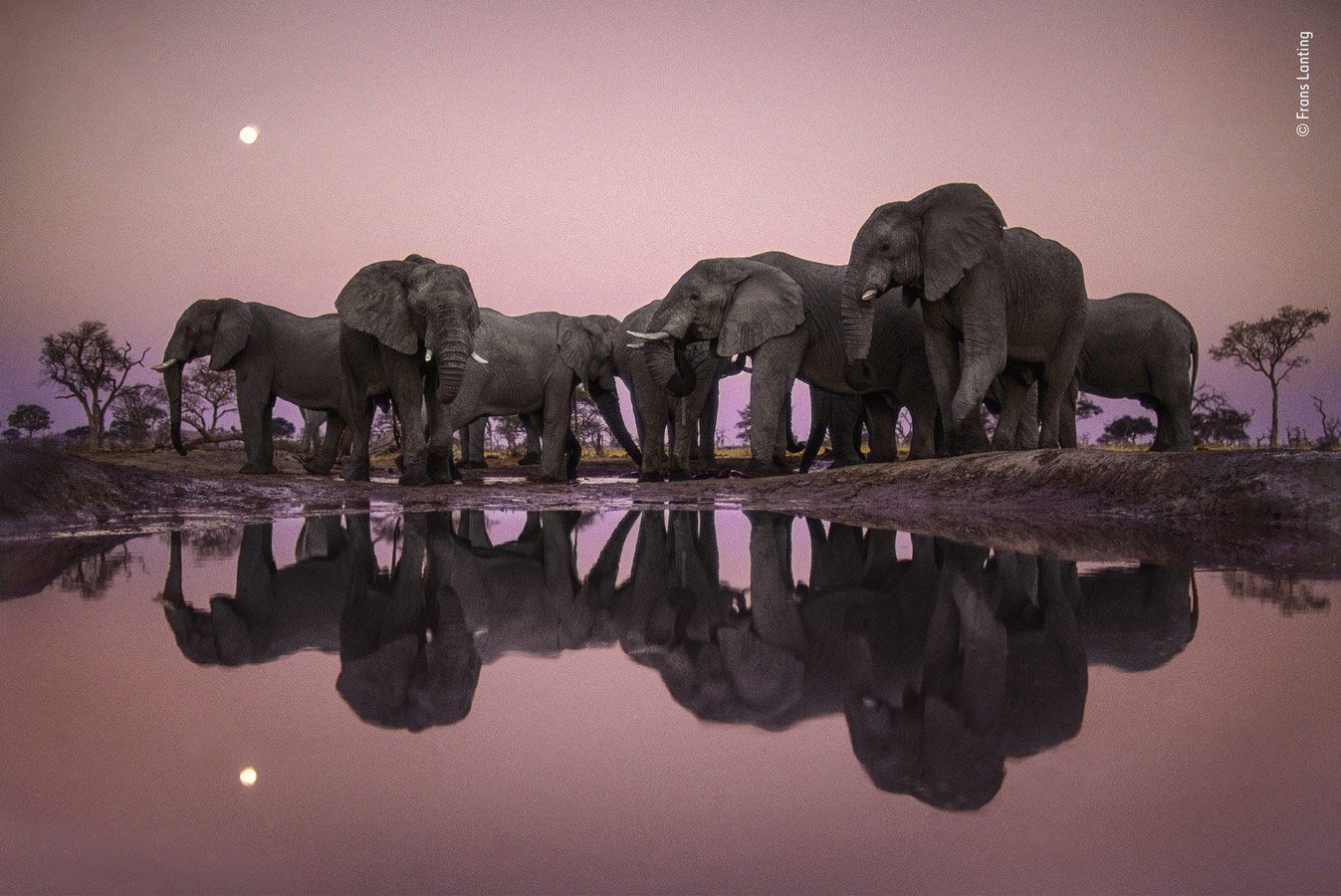 Wildlife Photographer of the Year Lifetime Achievement Award, Elephants at Twilight, © Frans Lanting, The Netherlands, Winner, Wildlife Photographer of the Year