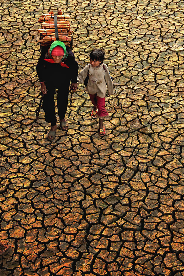 Drought, © Ngoc Anh Bach, Vietnam, 2nd Place, World Wood Day Photo Contest