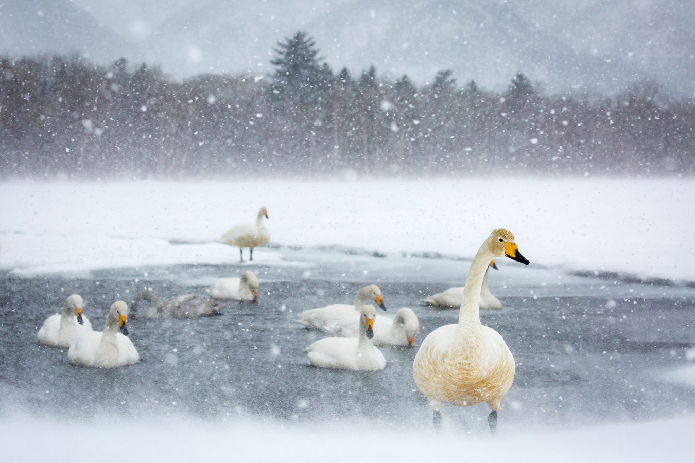 Swan Lake, © Kellie Netherwood, London, United Kingdom, First Place Amateur : Outdoor Scenes, World In Focus - The Ultimate Travel Photography Competition