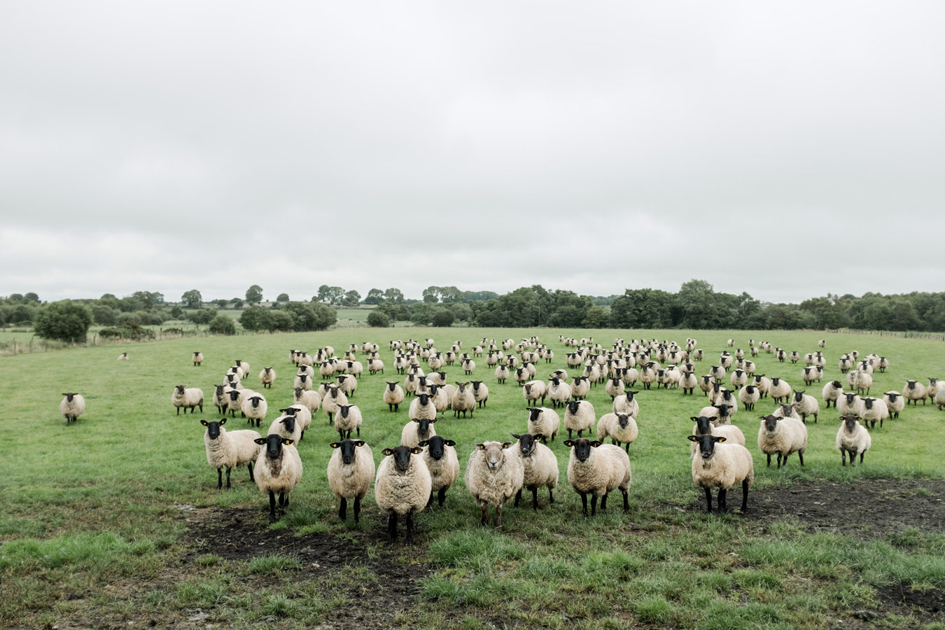 Counting Sheep, © Erin Mcginn, Warwick, RI, United States, First Place, World In Focus - The Ultimate Travel Photography Competition