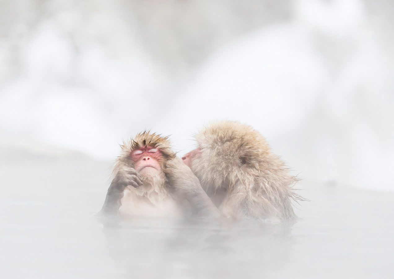 Hot Kiss, © Kousuke Kitajima, Hamamatsu, Shizuoka, Japan, World In Focus - The Ultimate Travel Photography Competition
