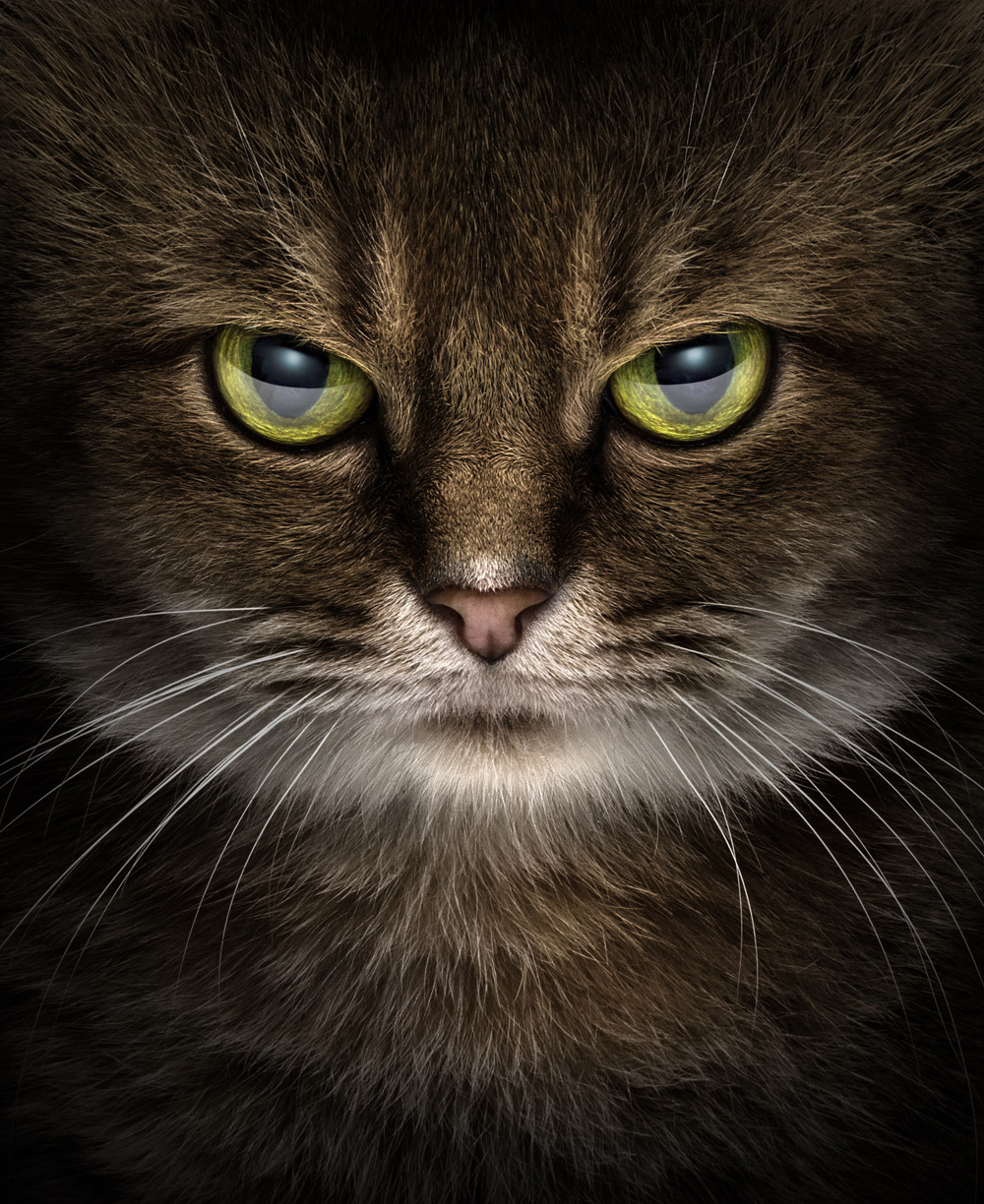 Kitty Stare, Erich Caparas, First Place : Portrait Division - Animals/Pets, 2017 WPPI First Half Competition