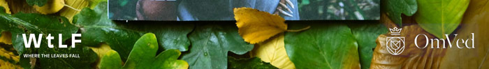 Photo Competition - Where The Leaves Fall