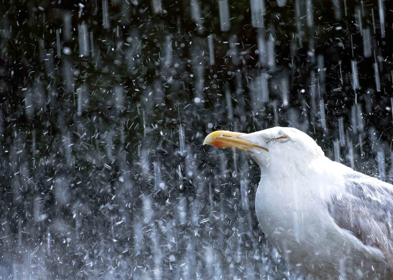 Summer Shower, © Gideon Knight, 16-18 Years Category Runner-up, RSPCA Young Photographer Awards