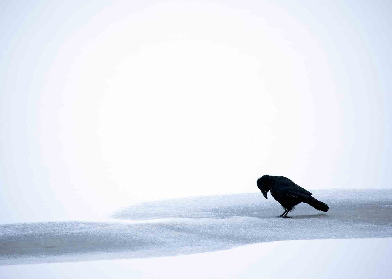Black on White, © Gideon Knight, 16-18 Years Category Commended, RSPCA Young Photographer Awards