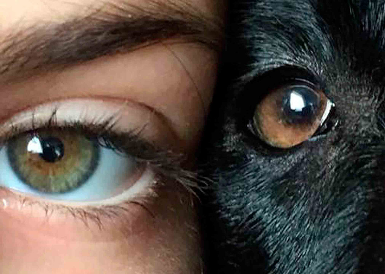 Best Friends, © Millie Rodgers, Under 12 Mobile Phone and Devices Category Winner 2018 and Judges' Special Mention, RSPCA Young Photographer Awards