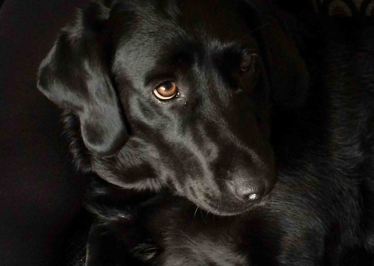 My Grandad's Doggy, Bella, © Phoebe O'Shaugnessy, Under 12 Mobile Phone and Devices Category Runner-up, RSPCA Young Photographer Awards