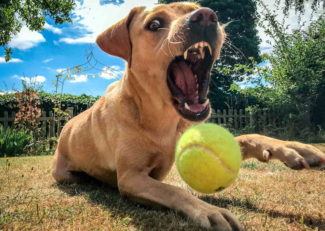 Goof-ball, © Kizzy Porter, 16-18 Years Mobile Phone and Devices Category Runner-up, RSPCA Young Photographer Awards