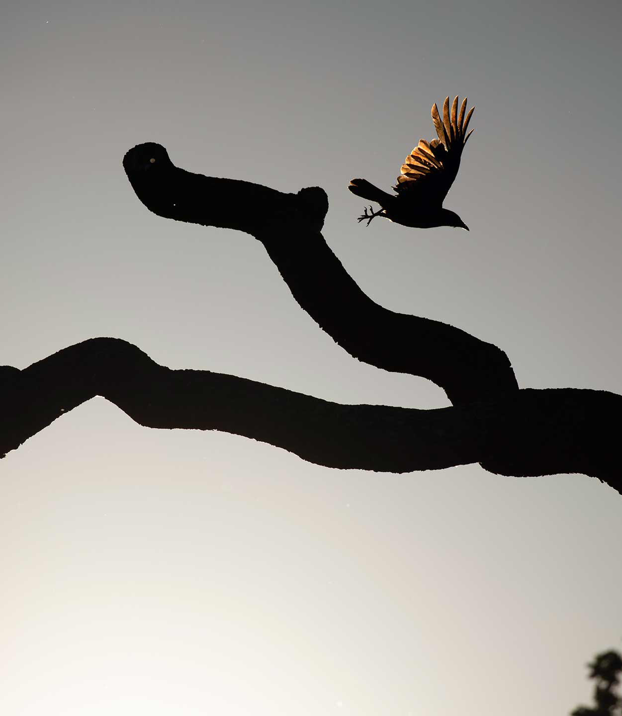 Take Flight (1 of 5), © Gideon Knight, Portfolio Category Winner, RSPCA Young Photographer Awards