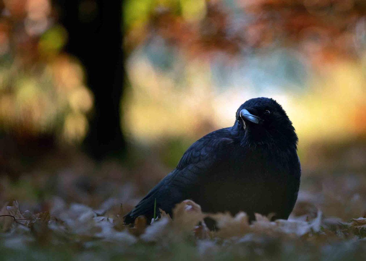 On an Autumn Morning (2 of 5), © Gideon Knight, Portfolio Category Winner, RSPCA Young Photographer Awards