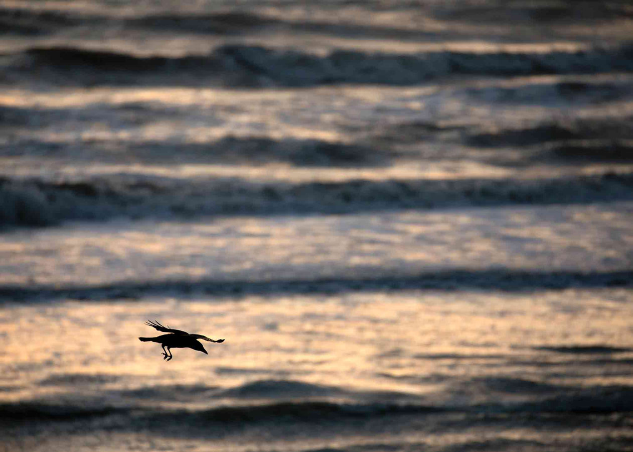 Seaside Swoop (5 of 5), © Gideon Knight, Portfolio Category Winner, RSPCA Young Photographer Awards