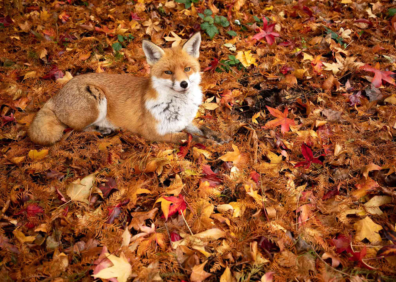 Autumn's Russet (1 of 5), © Gideon Knight, Portfolio Category Runner-up, RSPCA Young Photographer Awards