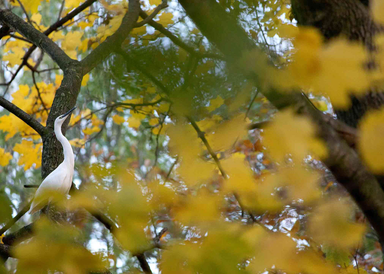 Little egret (2 of 5), © Gideon Knight, Portfolio Category Runner-up, RSPCA Young Photographer Awards