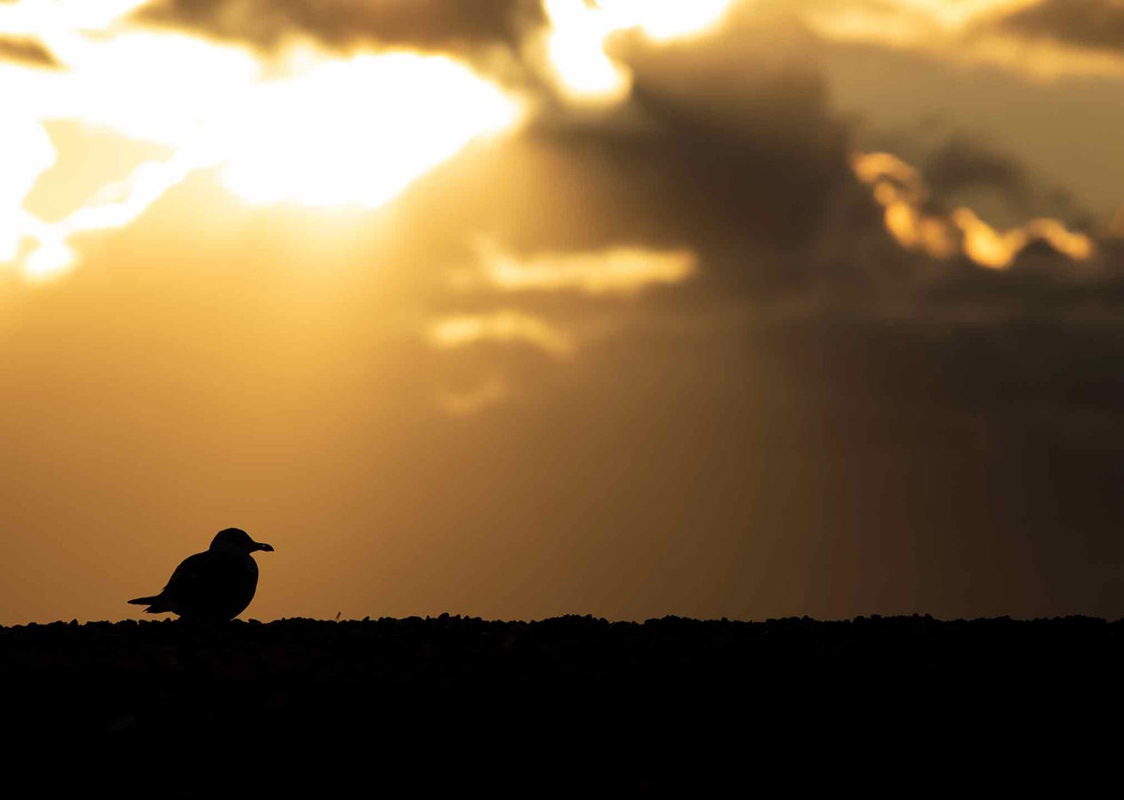 Southern Sunset (1 of 5), © Gideon Knight, Portfolio Category Commended, RSPCA Young Photographer Awards