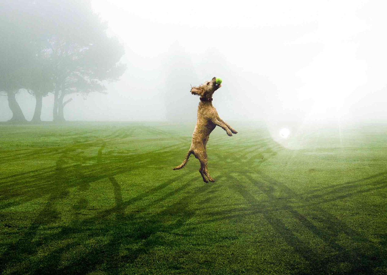 Leap of Faith, © Ollie Ross, Picture Perfect Pets Category Winner, RSPCA Young Photographer Awards