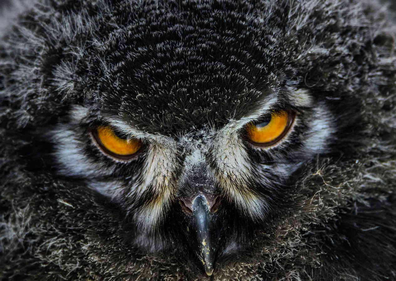 The Stare, © Joshua Myers, 12-15 Years Category Runner-up, RSPCA Young Photographer Awards
