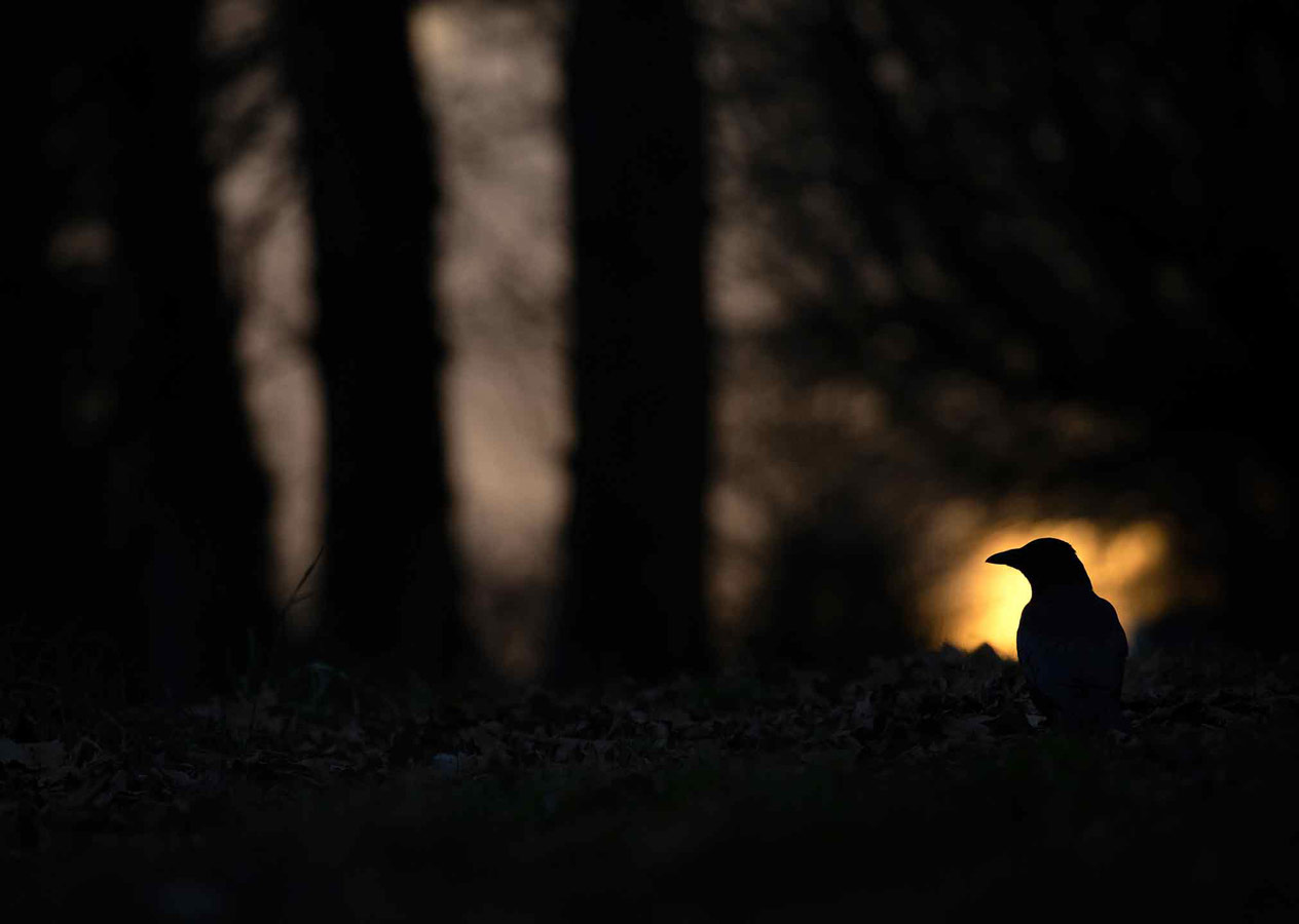 In the Dying Light, © Gideon Knight, 16-18 Years Category Winner, RSPCA Young Photographer Awards