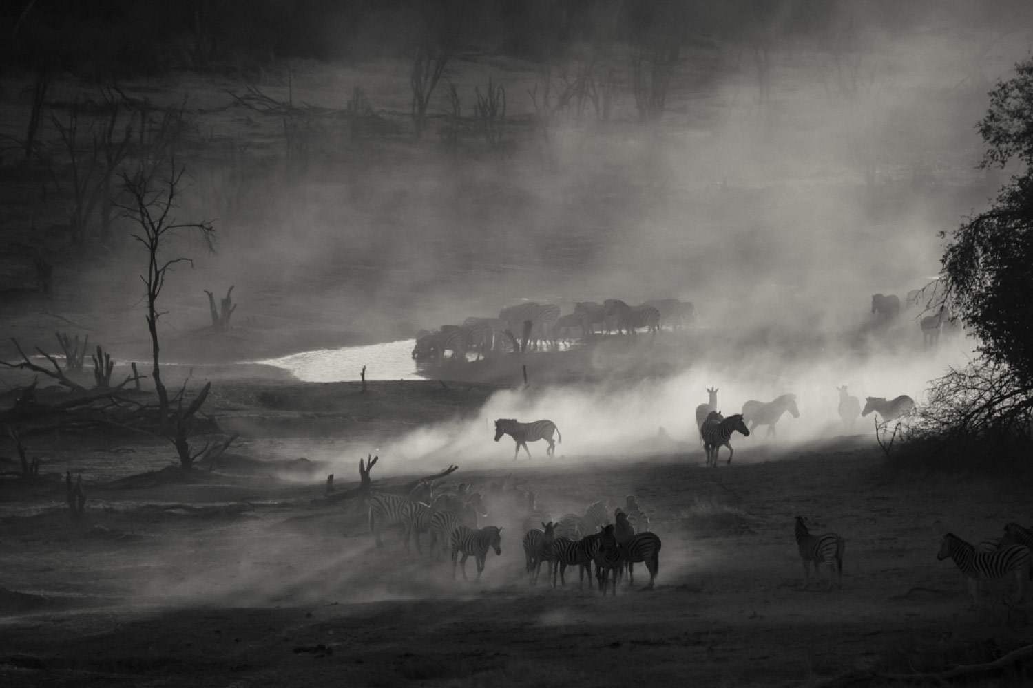 Cast To The Desert, © Daniel DUGMORE, 3rd Place, Professional - Landscape and Nature, Zebra Awards - TZIPAC Black and White Photographer of the Year