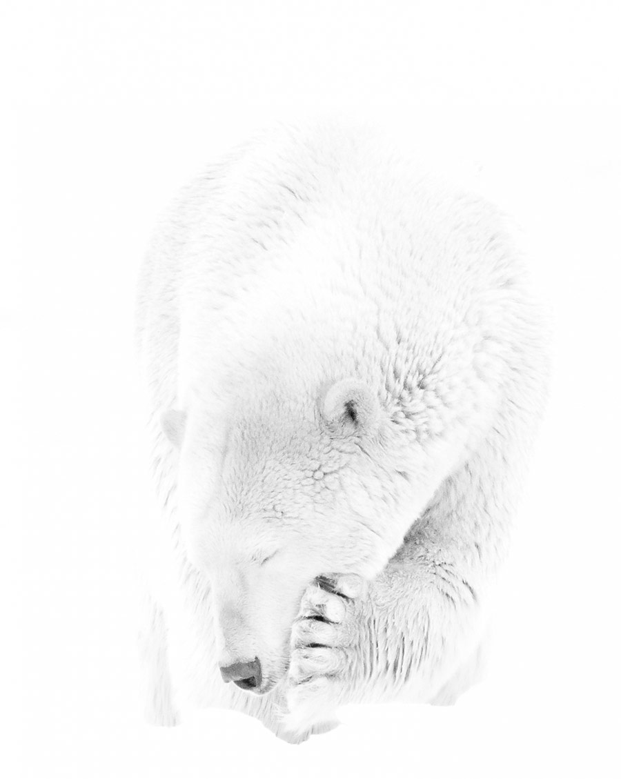 Polar solace, © Prelena SOMA OWEN, 1st Place, Non-Professional - People and Animals, Zebra Awards - TZIPAC Black and White Photographer of the Year