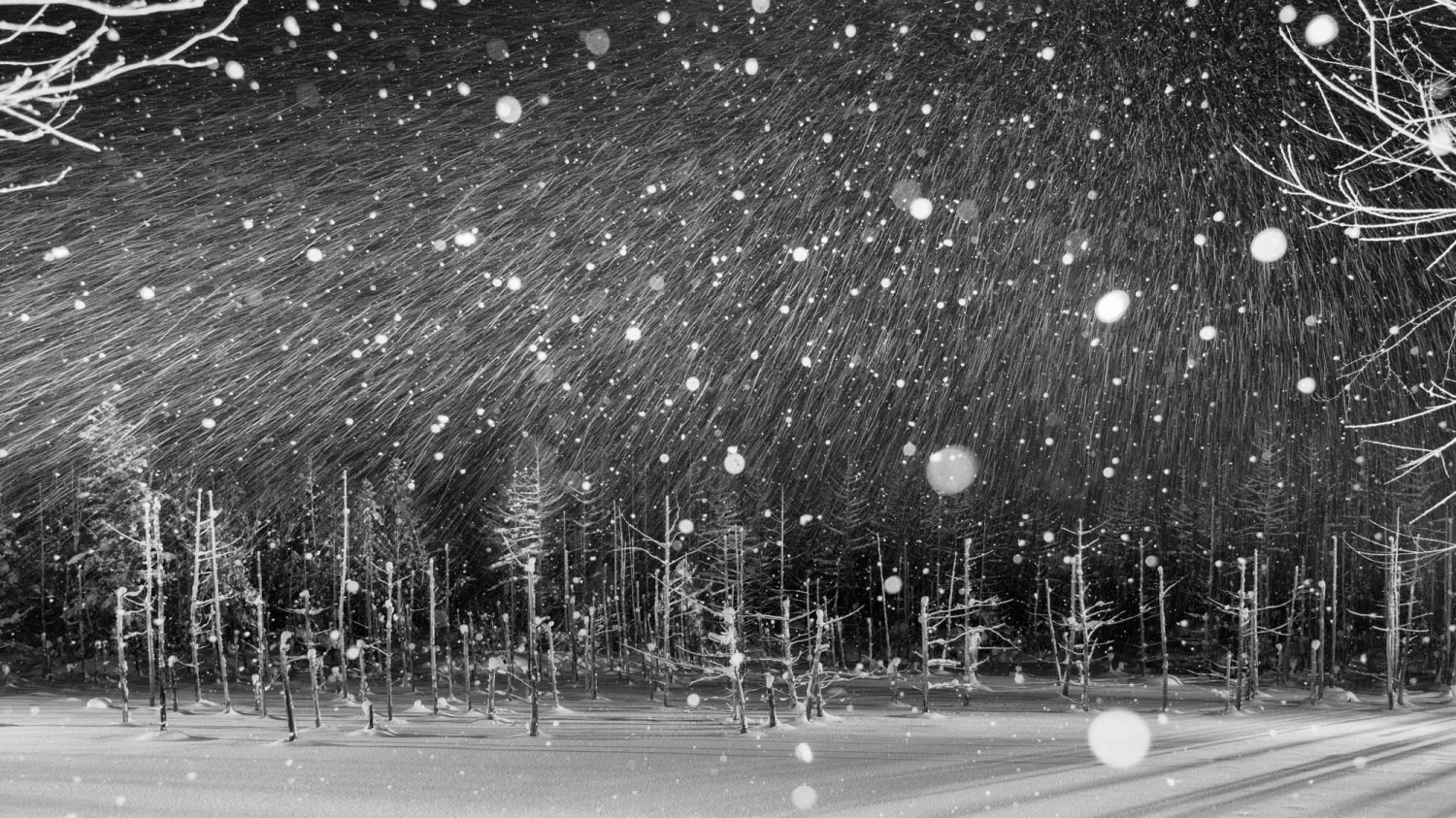 Snowy Night, © Yoshihiro ABIKO, Grand Winner, Professional, Zebra Awards - TZIPAC Black and White Photographer of the Year